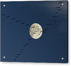 Cranes Flying To Moon Acrylic Print