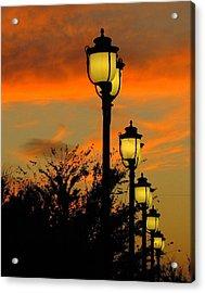 Cranes Roost Lights Acrylic Print