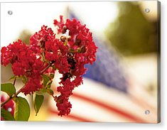Crapemyrtle And Patriotic Proud Acrylic Print by Toni Hopper