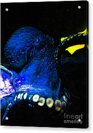 Creatures Of The Deep - The Octopus - V6 - Blue Acrylic Print by Wingsdomain Art and Photography