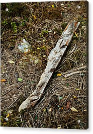 Creek Driftwood Acrylic Print by Ron St Jean