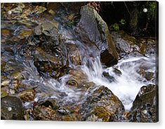 Creek Scene On Mt Tamalpais Acrylic Print