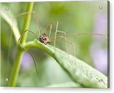Acrylic Print featuring the photograph Creepy Crawly Spider by Jeannette Hunt