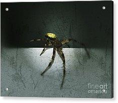 Creepy Spider Acrylic Print by Christy Bruna