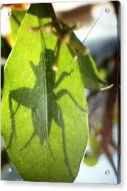 Cricket Shadow Acrylic Print by Debbi Saccomanno Chan