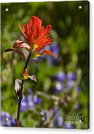 Crimson Paintbrush Acrylic Print by Sean Griffin