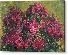 Crimson Phloxes Acrylic Print by Juliya Zhukova