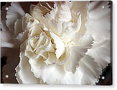 Acrylic Print featuring the photograph Crisp Carnation Photo by Deniece Platt