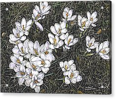 Crocus Flowers Acrylic Print by Robert Goudreau