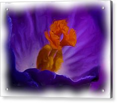 Crocus In Oil Acrylic Print
