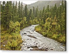 Crossing The Stream In Denali Acrylic Print by Jim and Kim Shivers