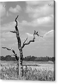Acrylic Print featuring the photograph Crow In Dead Tree by Brooke T Ryan