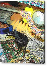 Acrylic Print featuring the mixed media Crow In Rehab by YoMamaBird Rhonda