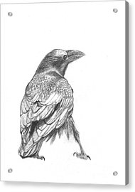 Crow Acrylic Print by Kazumi Whitemoon