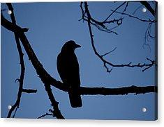 Crow Silhouette Acrylic Print
