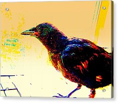 Acrylic Print featuring the mixed media Crow Walk by YoMamaBird Rhonda