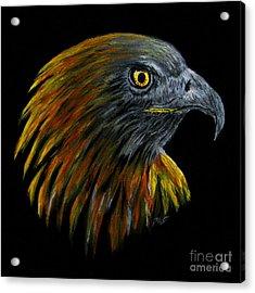 Crowhawk Acrylic Print by Peter Piatt