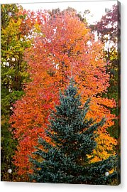 Crowning Glory Of Autumn Acrylic Print by Randy Rosenberger