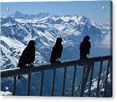 Crows On Top Of Mount Titlis Switzerland Acrylic Print
