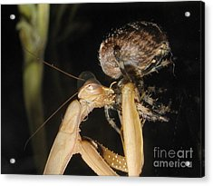 Acrylic Print featuring the photograph Crunch by Tina Marie