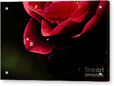 Acrylic Print featuring the photograph Crying Rose by Tamera James