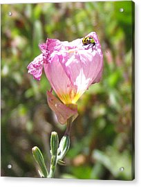 Acrylic Print featuring the photograph Cucumber Beetle by Bonnie Muir