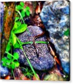#culebra #snake #corredora #serpiente Acrylic Print