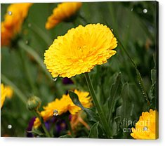 Cup Floweth Over Acrylic Print by Erica Hanel