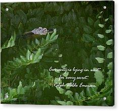 Curiosity Acrylic Print by Grace Dillon