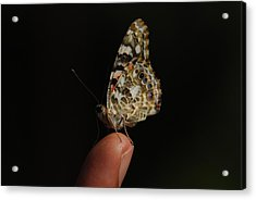 Acrylic Print featuring the photograph Curious Butterfly by Tam Ryan