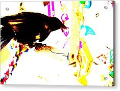 Acrylic Print featuring the mixed media Curious Crow by YoMamaBird Rhonda