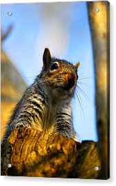 Acrylic Print featuring the photograph Curious Fellow by John Chivers