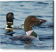 Acrylic Print featuring the photograph Curious Loons by Steven Clipperton