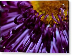 Curling Up Acrylic Print by Christy Phillips