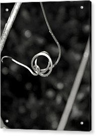 Acrylic Print featuring the photograph Curls And Swirls by Ester  Rogers