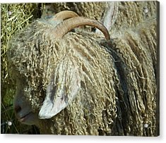 Acrylic Print featuring the photograph Curly Locks by Mary Zeman