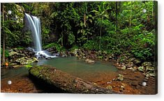Curtis Falls - Mt Tamborine Acrylic Print by Mark Lucey