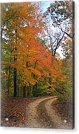 Curve In Fall Acrylic Print by Marty Koch