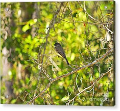 Cute Chickadee Acrylic Print by Al Powell Photography USA