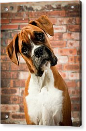 Cute Dog Acrylic Print