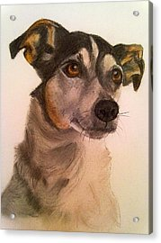 Cute Jack Russell Acrylic Print by Diane Leuzzi