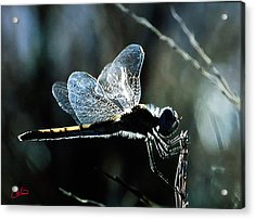 Cute Little Fellow Acrylic Print by Colette V Hera  Guggenheim