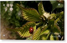 Cute Red Ladybug  Acrylic Print by Garnett  Jaeger