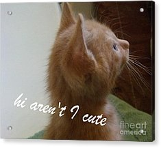 Cutest Kitty Ever Acrylic Print by Garnett  Jaeger