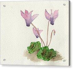 Cyclamen Acrylic Print by Annemeet Hasidi- van der Leij