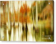 Cypress Morning Acrylic Print by Scott Pellegrin