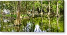 Cypress Plantation  Acrylic Print