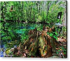 Cypress Stump At Buford Spring Acrylic Print by Barbara Bowen