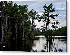 Acrylic Print featuring the photograph Cypress Swamp In Louisiana by Ester  Rogers