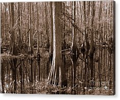 Cypress Swamp Reflection In Sepia Acrylic Print by Carol Groenen
